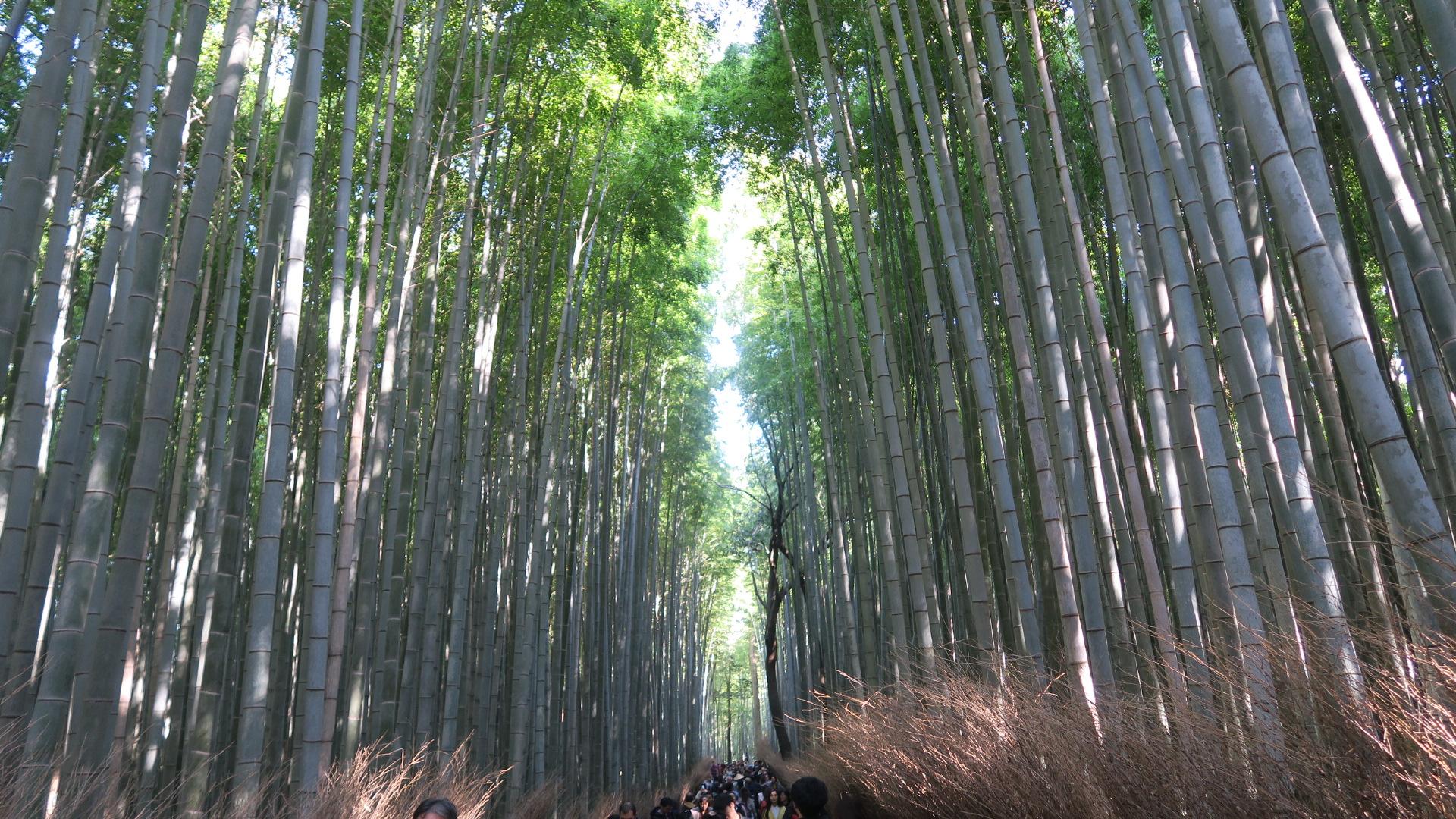 Chikuri-no-mori (Bamboo Forest)