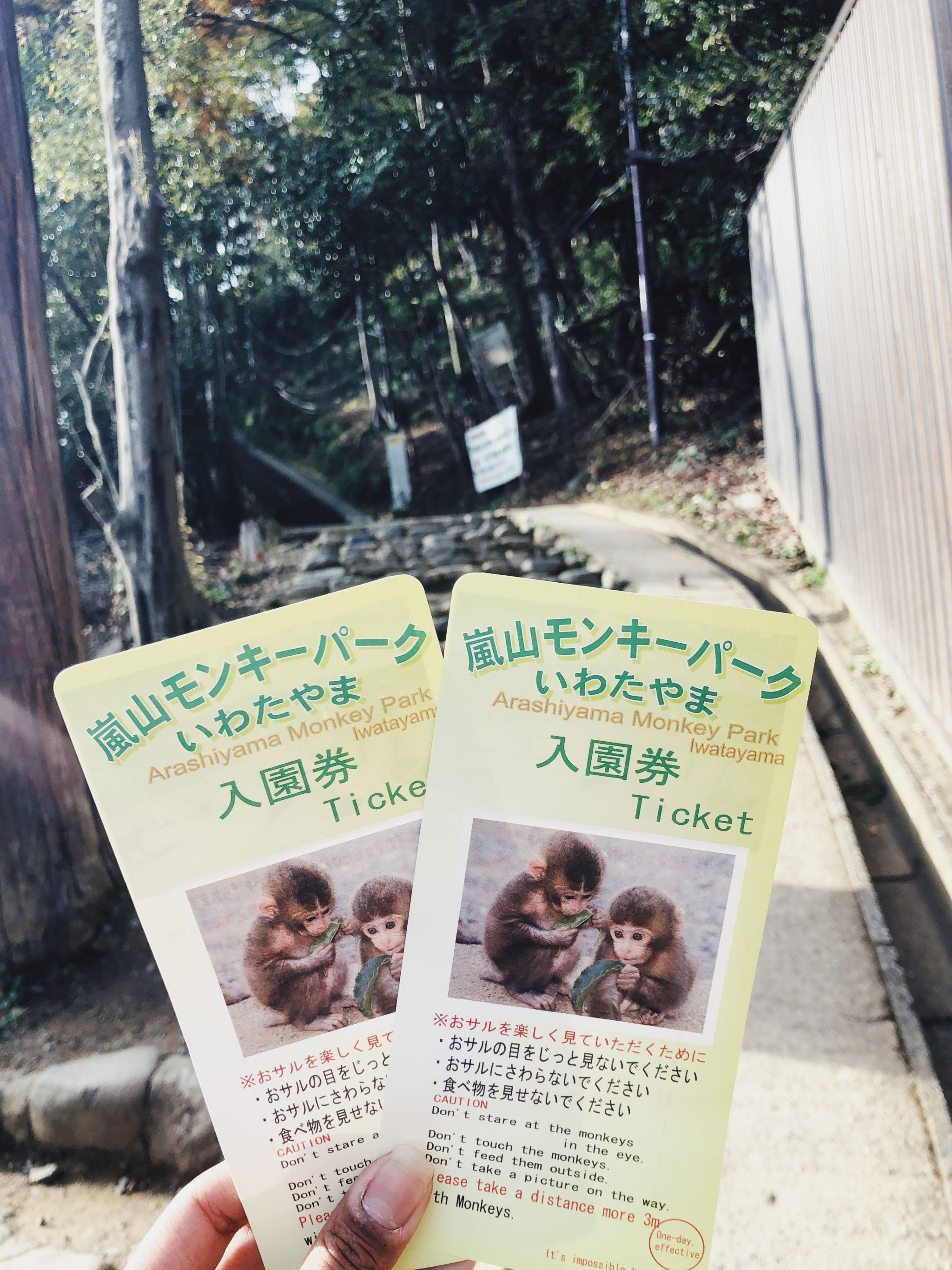Arashiyama Monkey Forest
