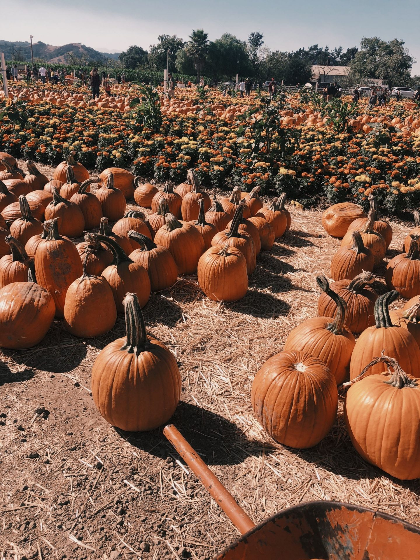 Wander the Bay: Pumpkin Patch