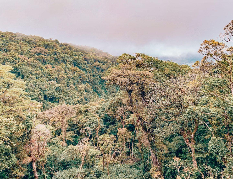Monte Verde Rainforest