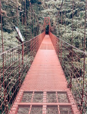 Monte Verde Rainforest, Costa Rica Rainforest, Bridge
