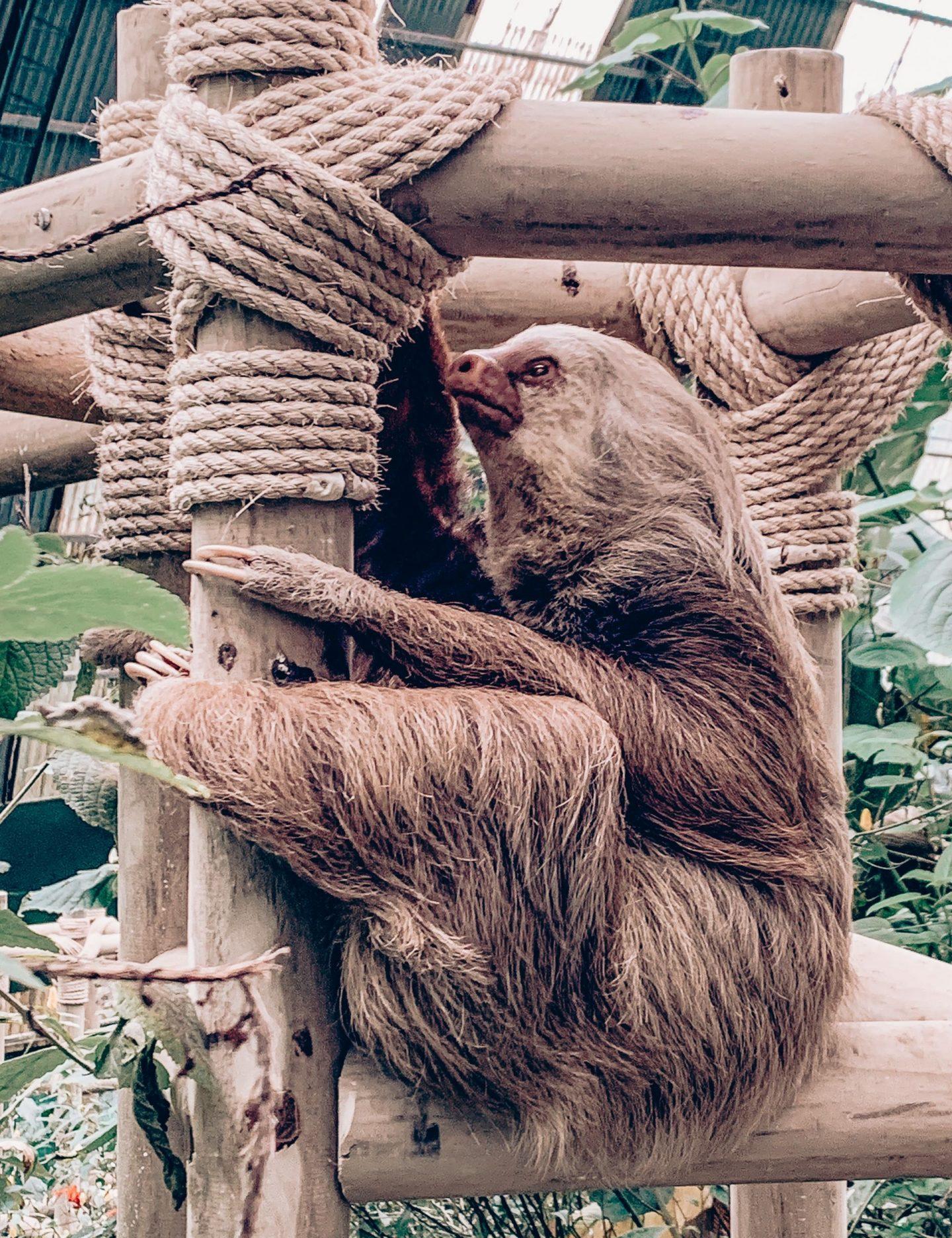 Sloths Costa Rica
