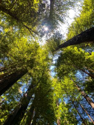 Big Basin Ca, California Day Trip, Santa Cruz Mountains, Redwood Forest